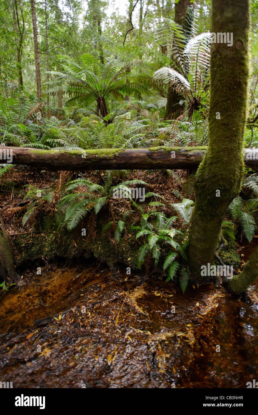 Rainforest Soil Stock Photos Amp Rainforest Soil Stock