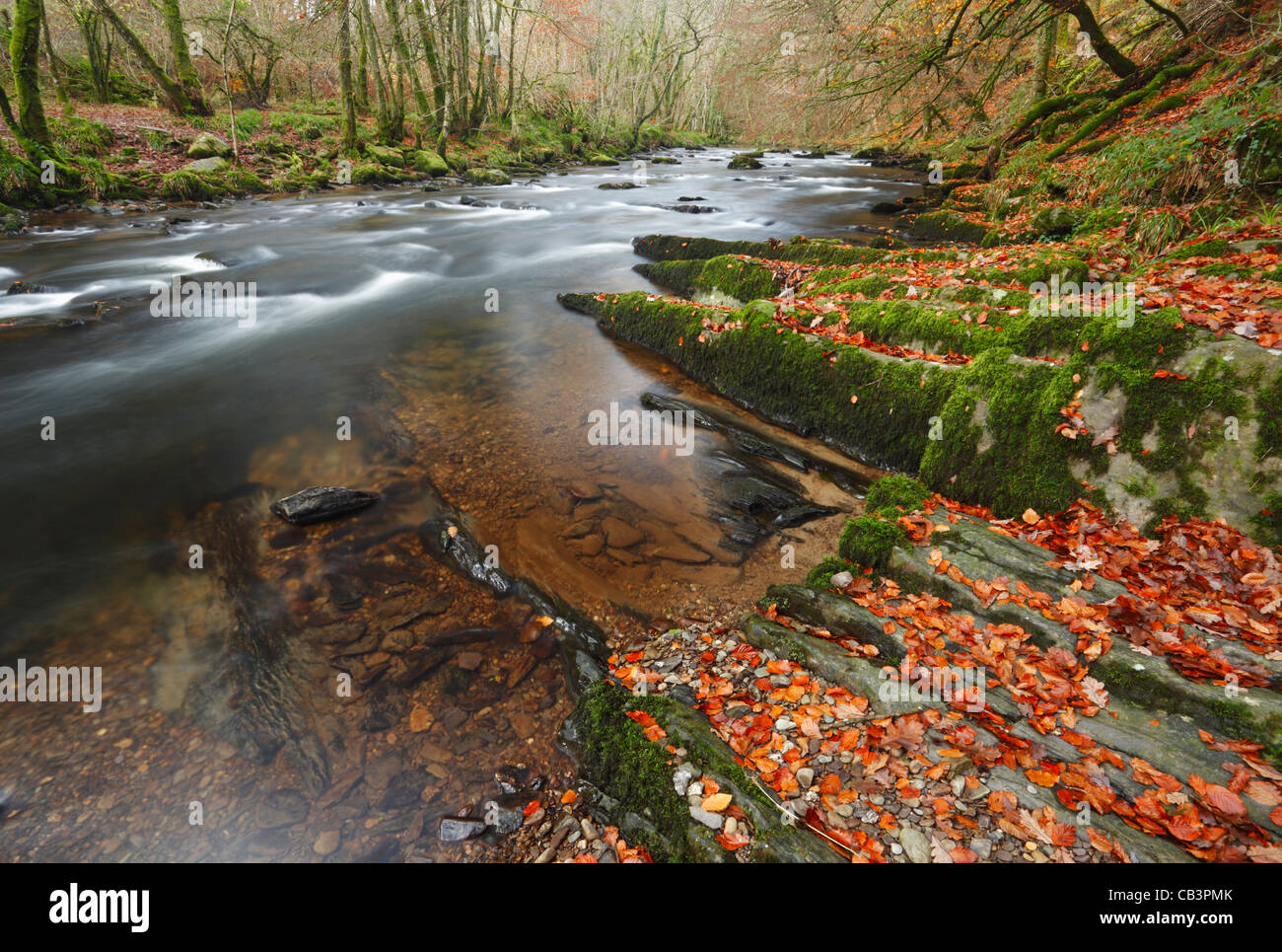 The River Barle near Tarr Steps. Autumn. Exmoor National Park. Somerset. England. UK. - Stock Image