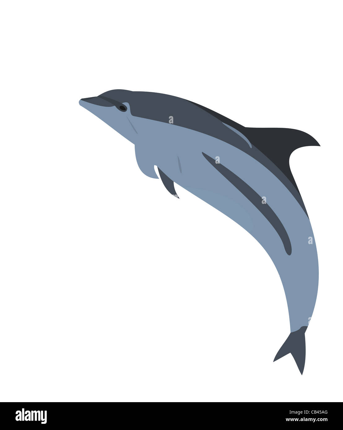 Illustration of a jumping dolphin - vector - Stock Image