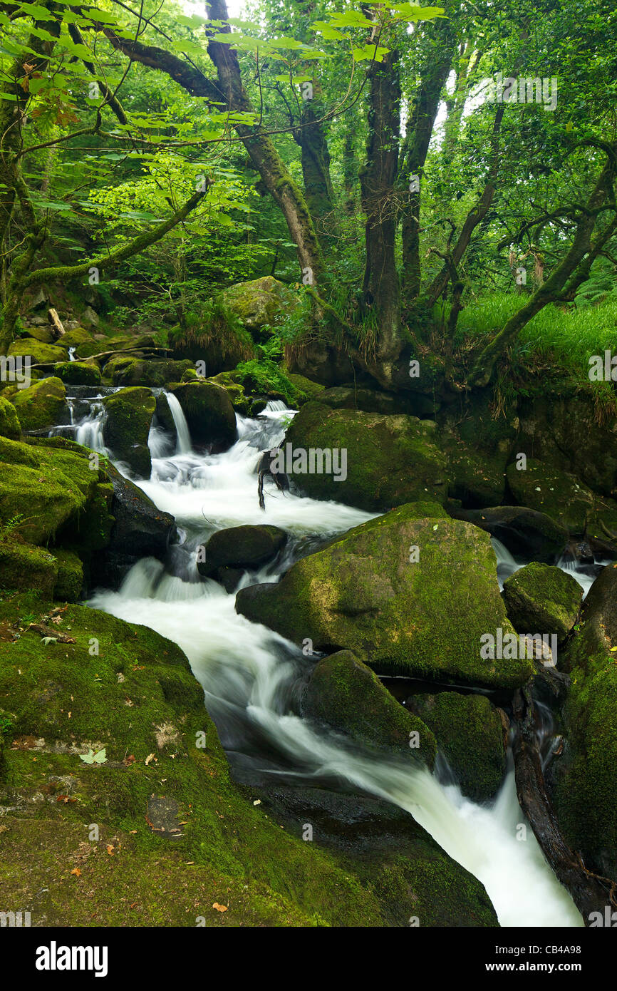 River Fowey at Golitha Falls National Nature Reserve, sessile oak woodland,  Bodmin Moor,  Cornwall, South West - Stock Image