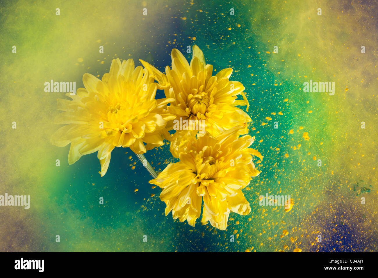 golden-daisy flowers and universe like explosion of color paint ...