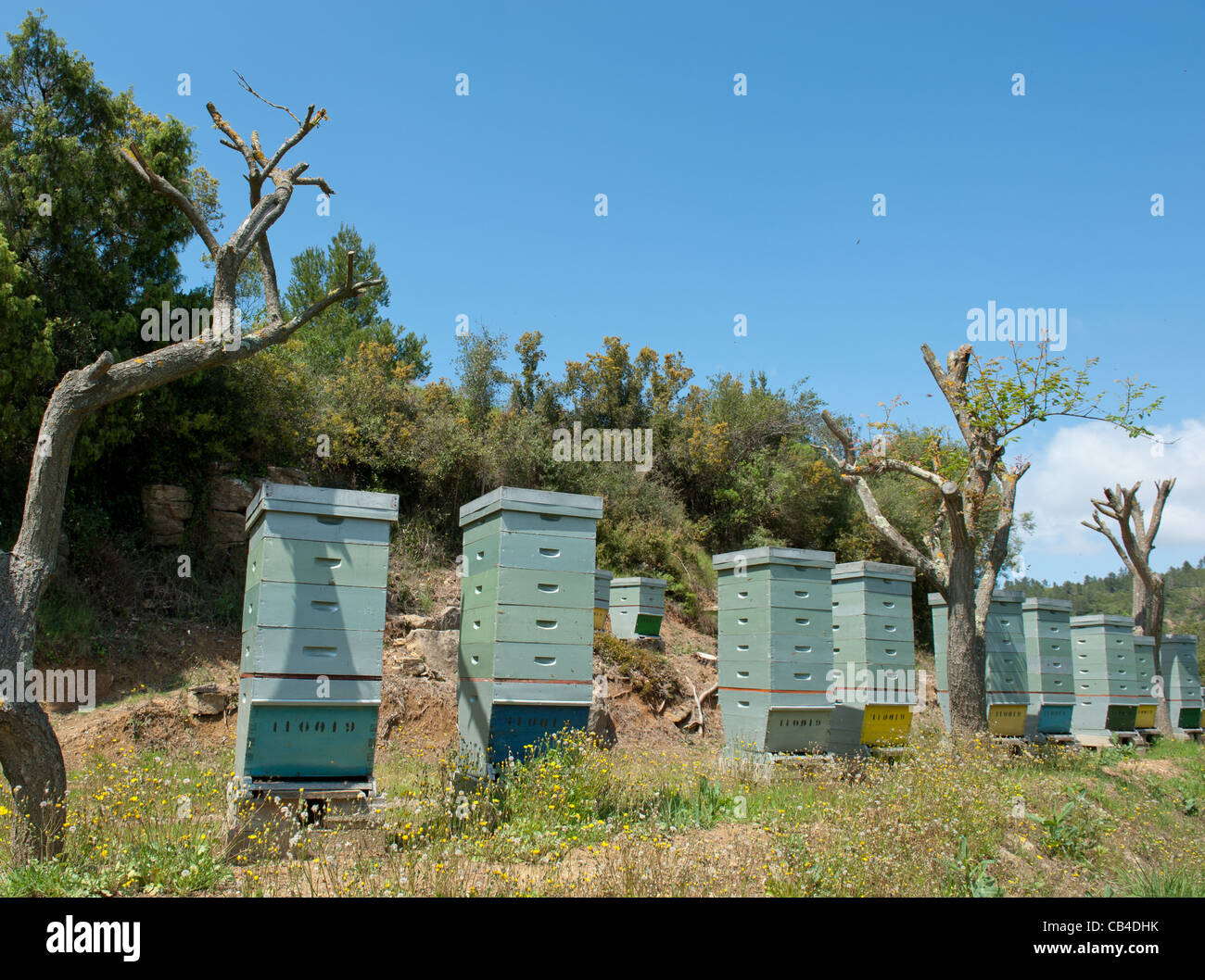 Beehives in the backcountry of Sanary-sur-Mer in Provence, France - Stock Image