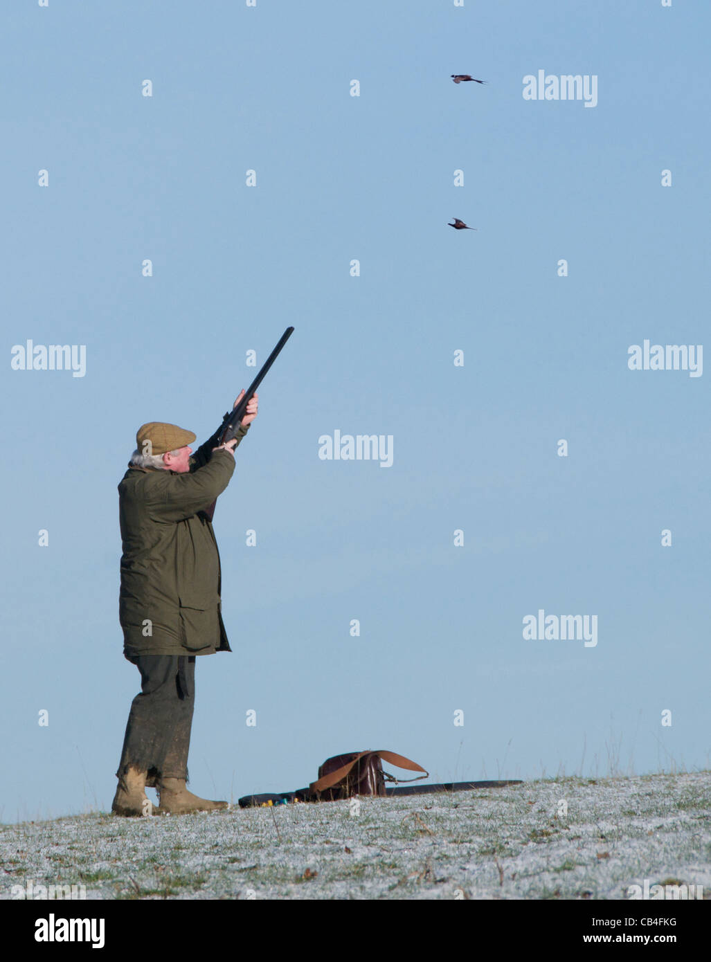 Shooting Uk Pheasant Stock Photos & Shooting Uk Pheasant Stock ...