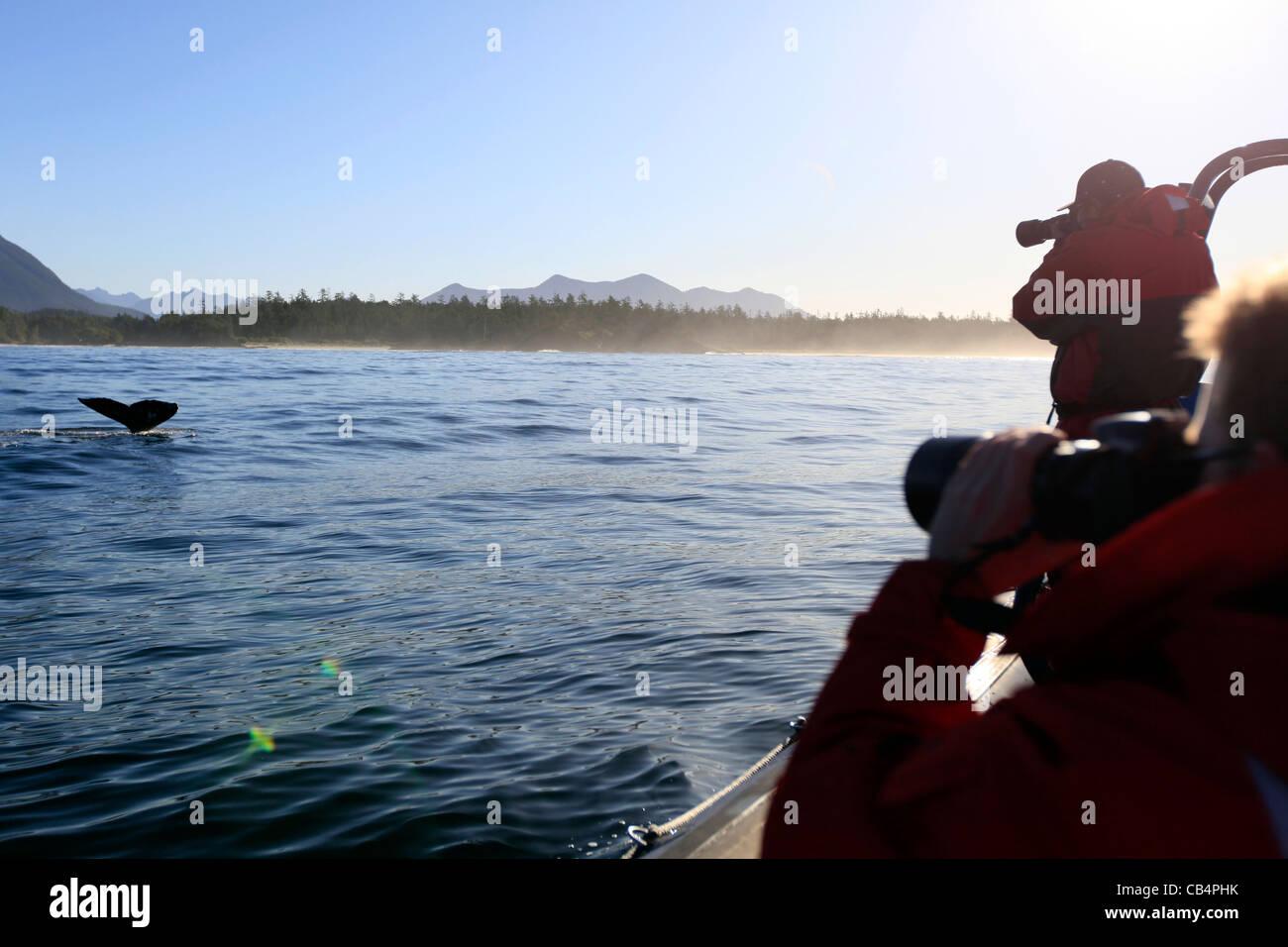 Tofino Whale Watching - Stock Image