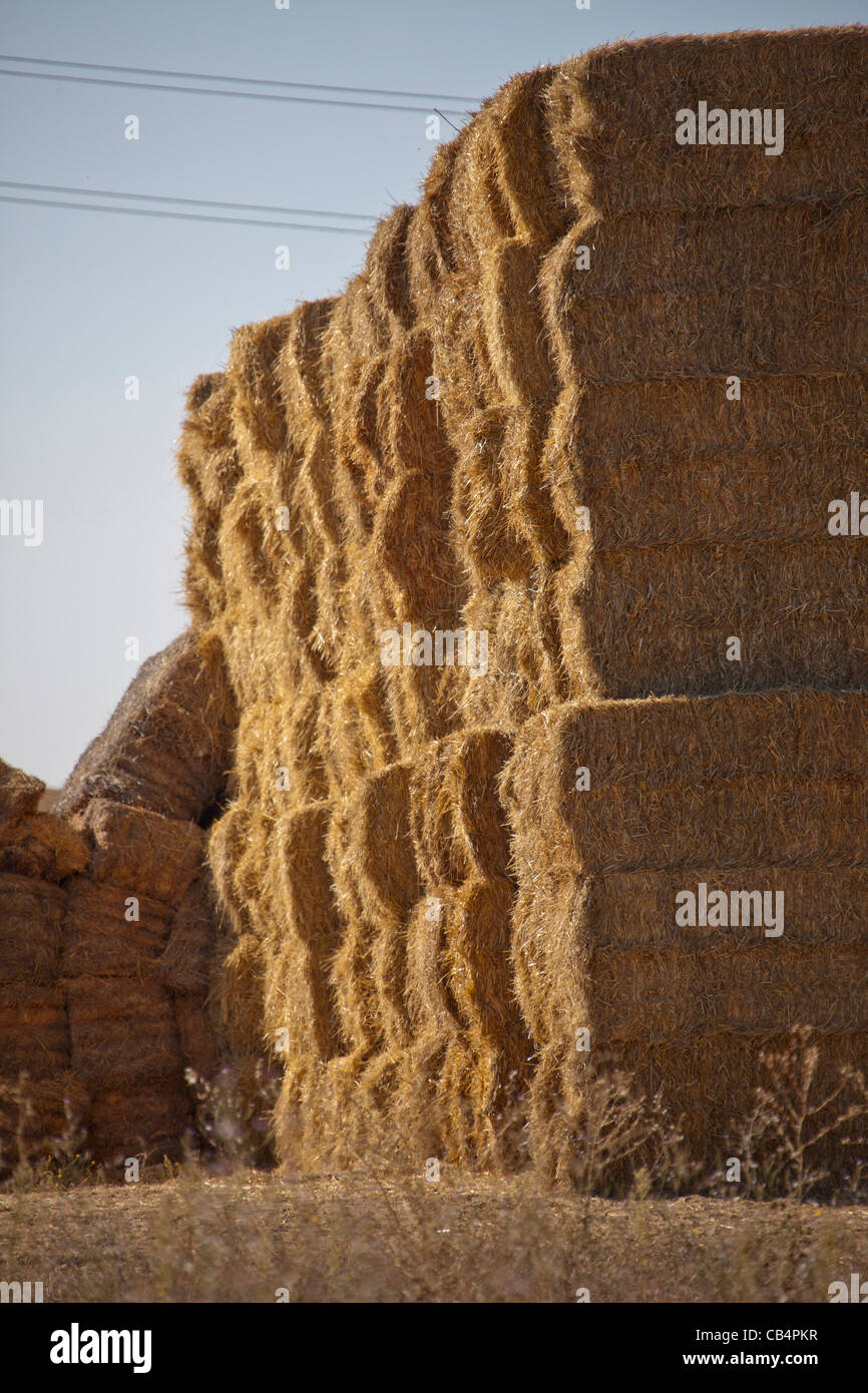 Straw bales in huge stacks waiting for burning in ECO2 power station  in ORSONO Spain for generating electricity. - Stock Image
