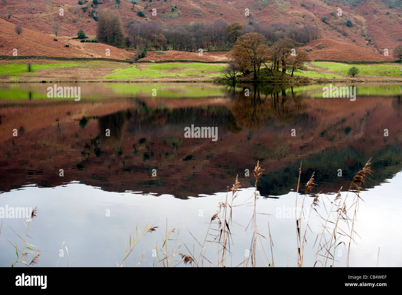 Reflection in Crummock Water  a lake in Cumbria the Lake District England UK - Stock Image