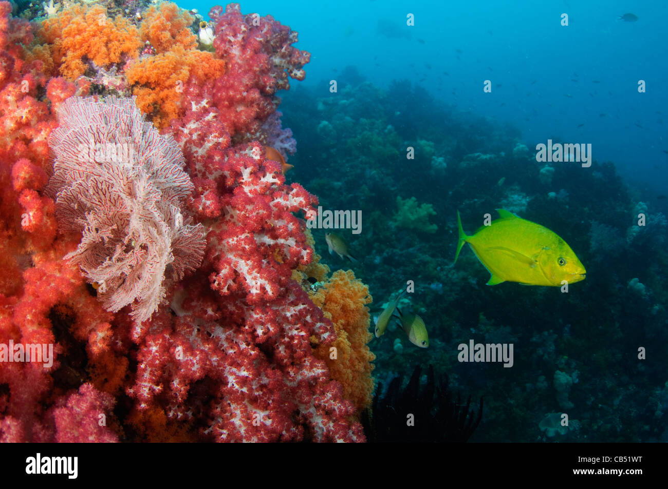 Spotted Trevally Stock Photos & Spotted Trevally Stock Images - Alamy