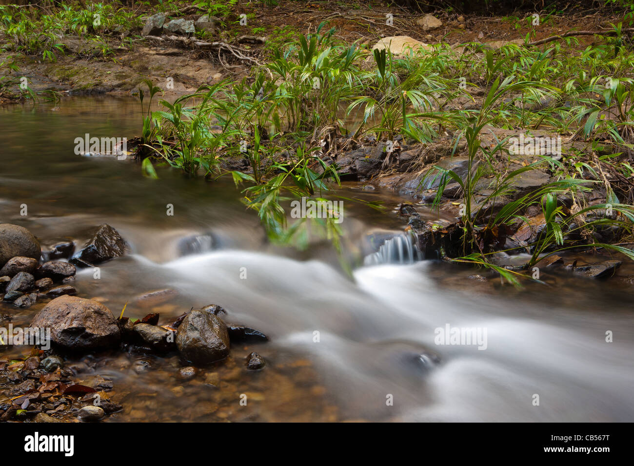 River stream beside the old overgrown Camino Real trail in Portobelo national park, Republic of Panama. - Stock Image