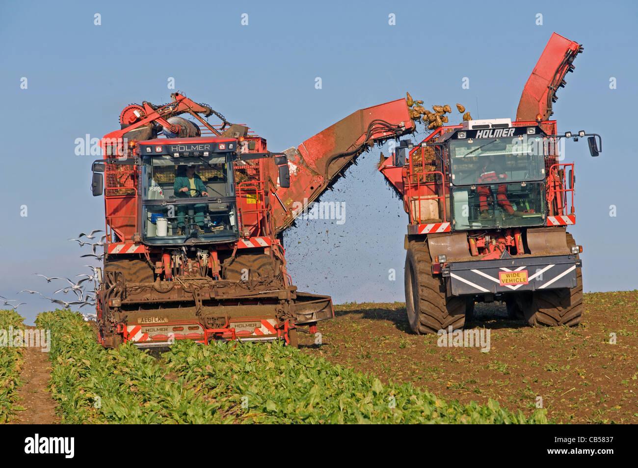 Holmer self-propelled sugar beet harvesters - Stock Image