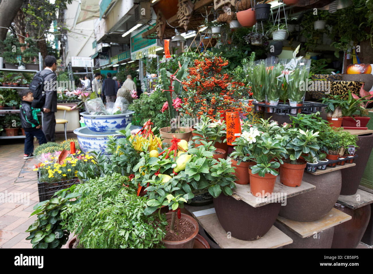 potted plants at the flower market mong kok district kowloon hong kong hksar china - Stock Image