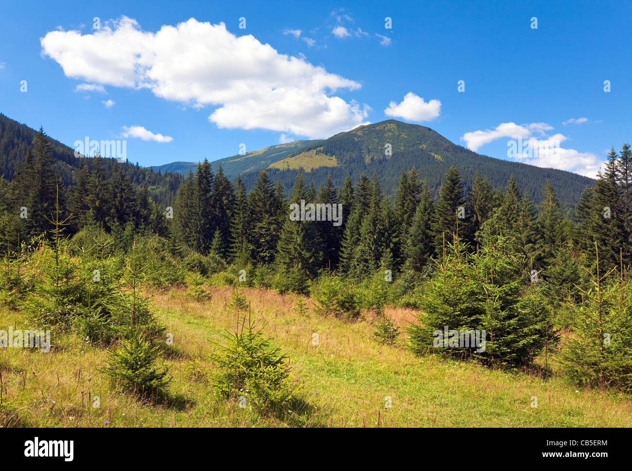 Summer mountain view with glade and conifer forest - Stock Image