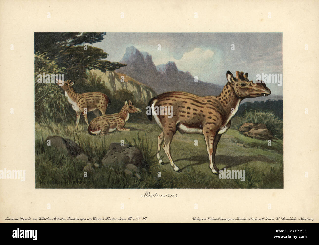 Protoceras, extinct genus of Artiodactyla, - Stock Image