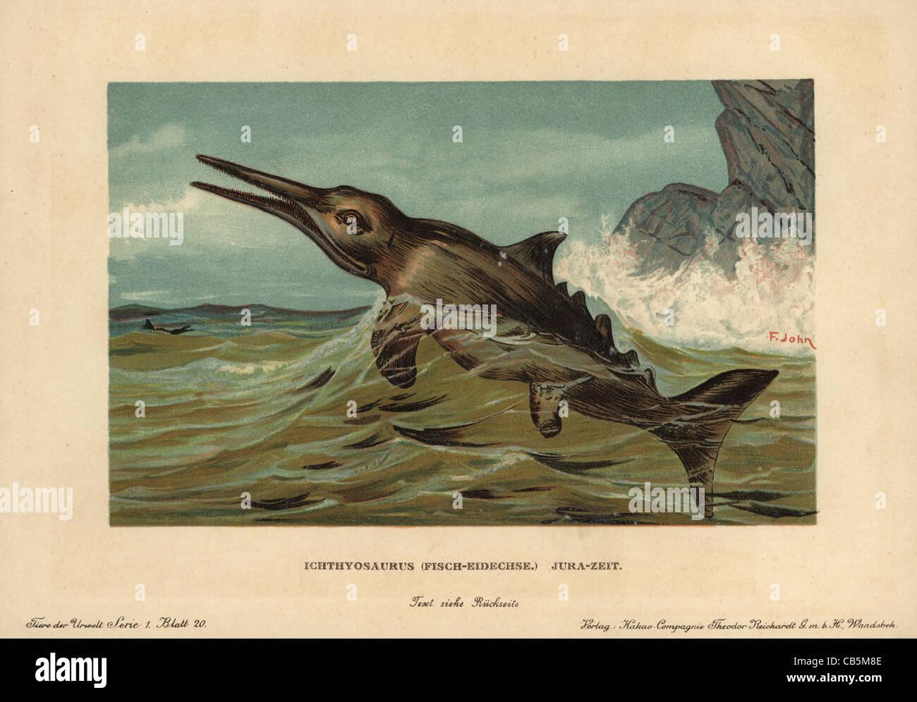 Ichthyosaurus communis, extinct nektonic carnivore of the Jurassic. Stock Photo