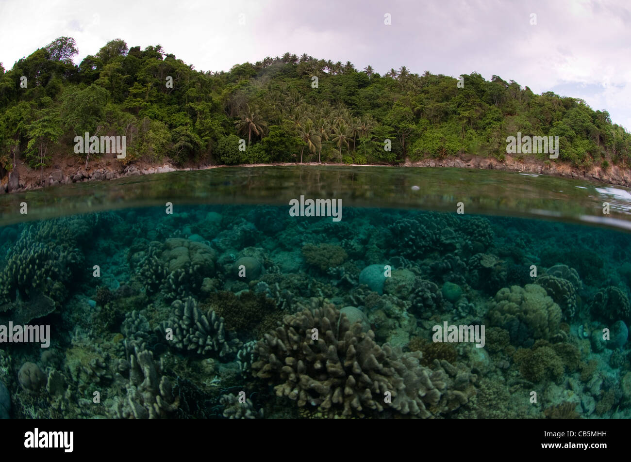 Split photo of a hard coral garden and Lembeh Island - Stock Image