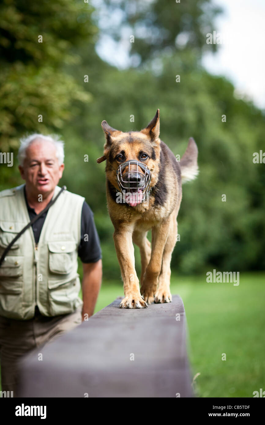 Master and his obedient (German Shepherd) dog at a dog training center - Stock Image
