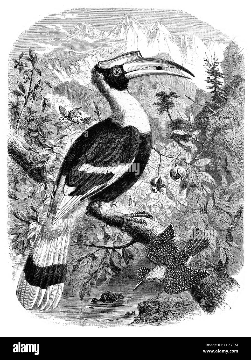 The Crested Toucan and the spotted Fishing Martin - Stock Image