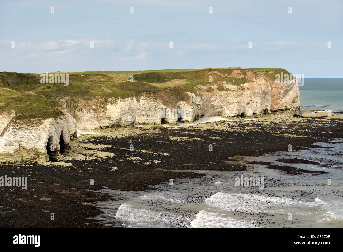 North over the chalk cliffs North Sea coast of Flamborough Head, East Yorkshire, England, UK. Low tide exposes shoreline - Stock Image