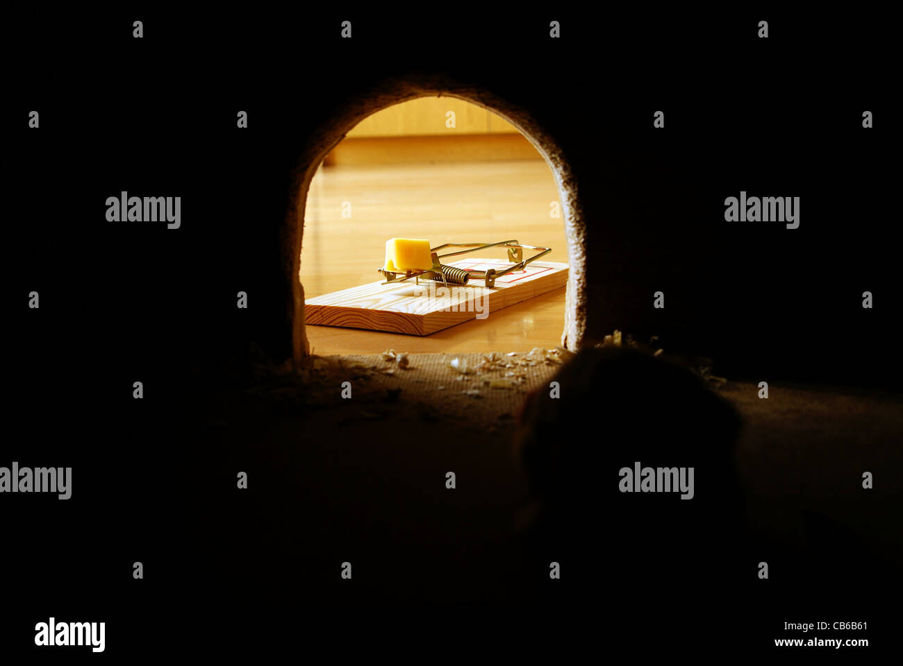 rat hole dark and trap with cheese - Stock Image