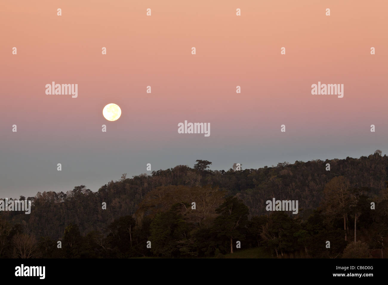 Moon and colorful skies before daybreak at the border of La Amistad national park, Chiriqui province, Republic of - Stock Image