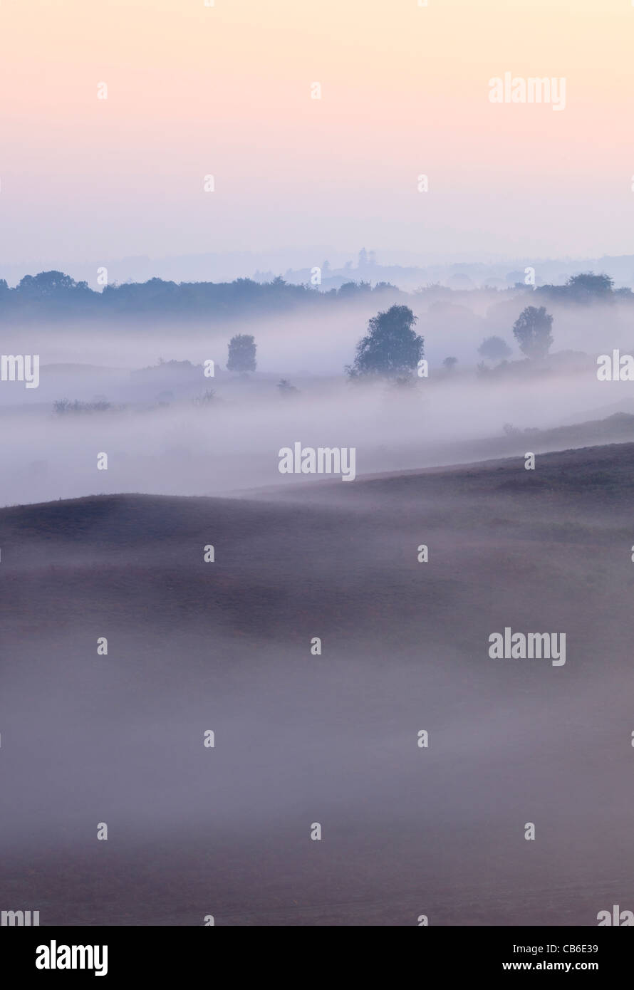 A misty autumn dawn at Rockford Common in the New Forest National Park, Hampshire, UK - Stock Image