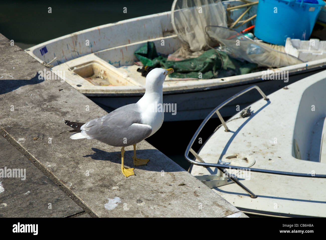Seagull at Livorno - Stock Image