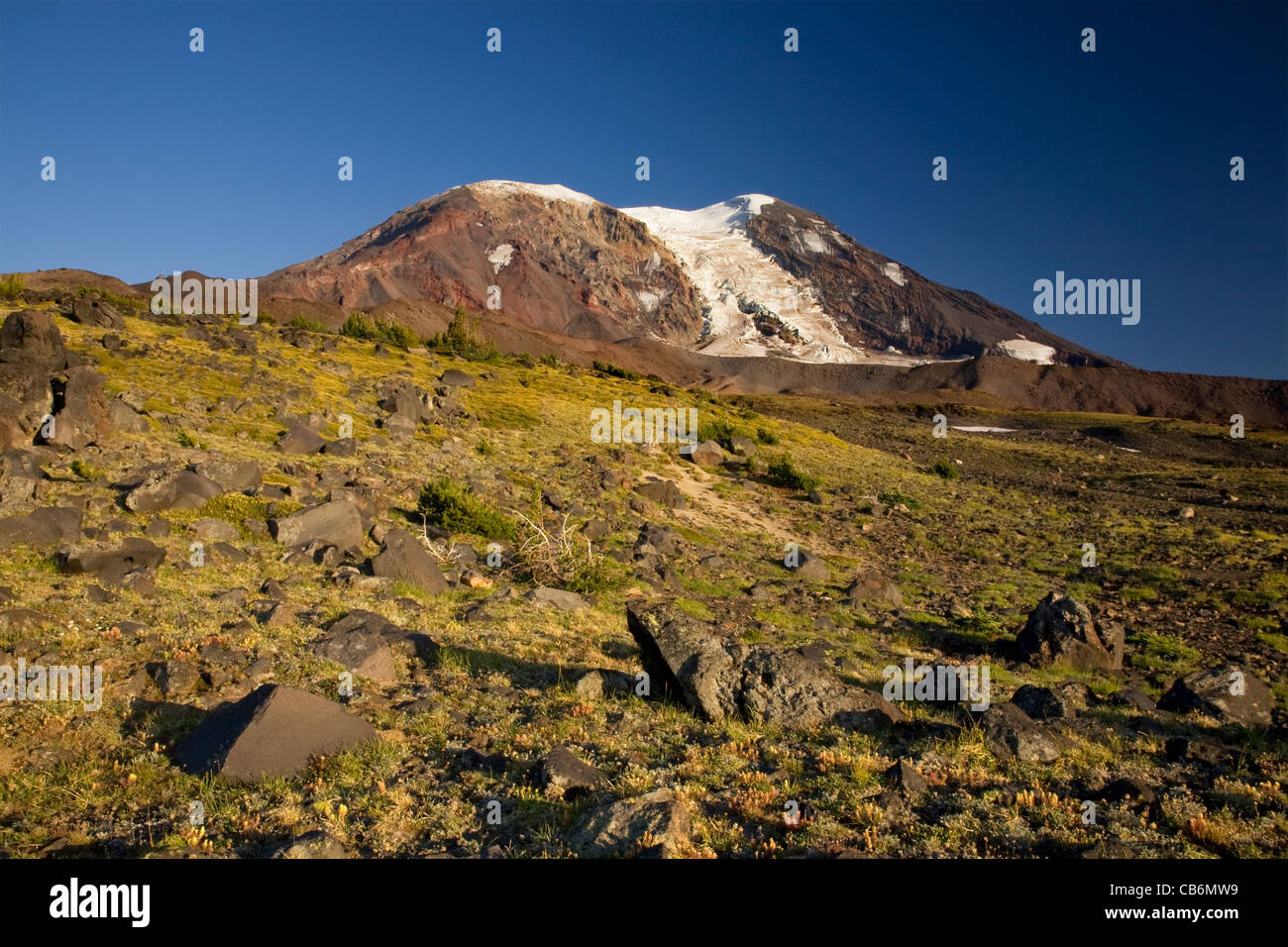 Alpine Meadow At High Camp Below The Adams Glacier Climbing Route On Mount Adams In The Mount Adams Wilderness Area