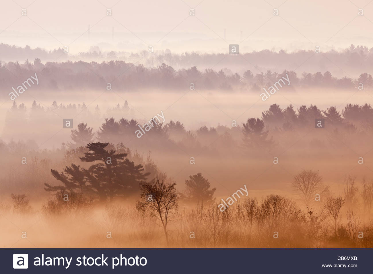 Rolling farmland early on a autumn morning in a radiation type fog in Durham region in Ontario Canada - Stock Image