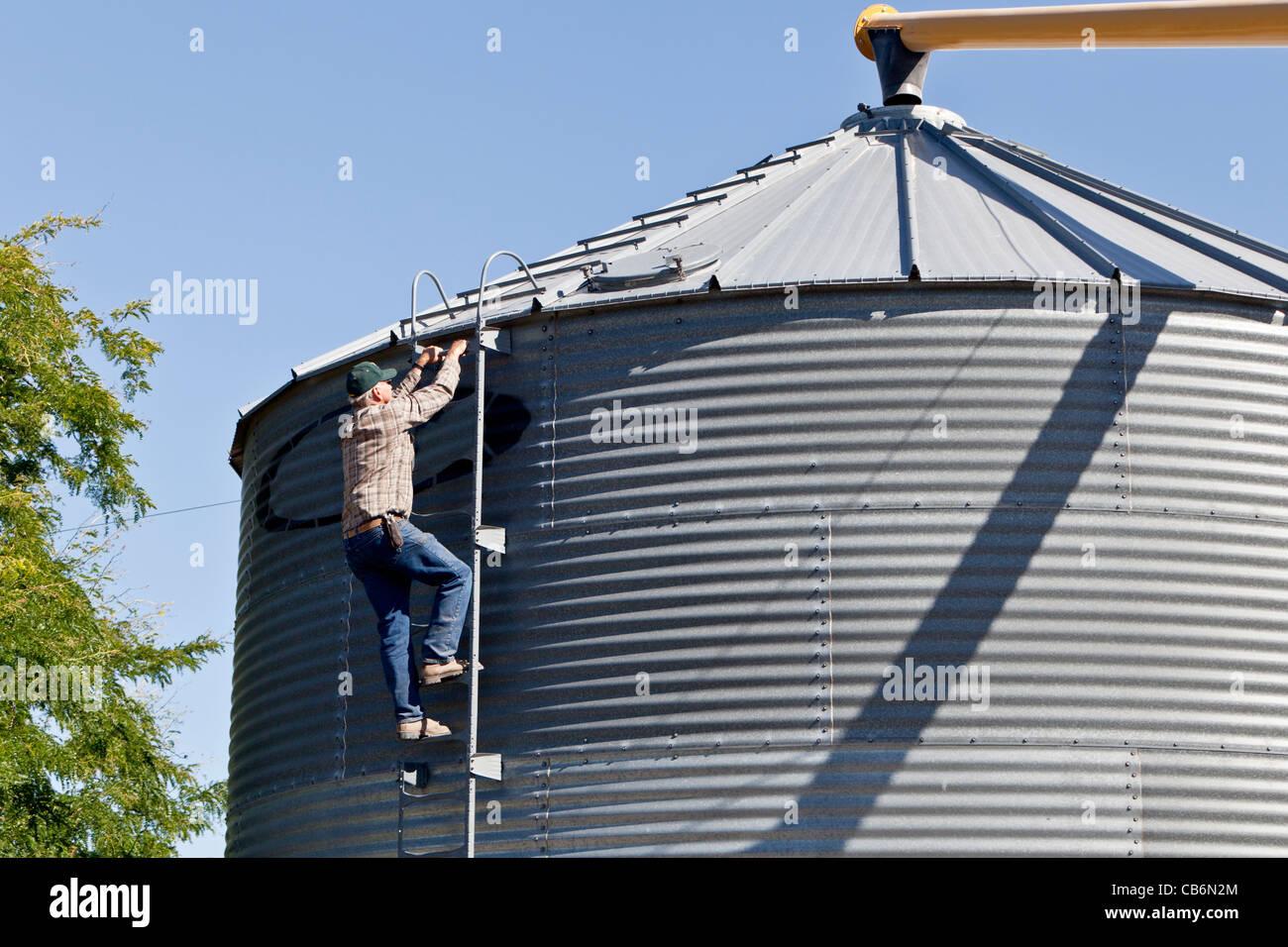 Wheat farmer climbing ladder, grain storage bin. - Stock Image