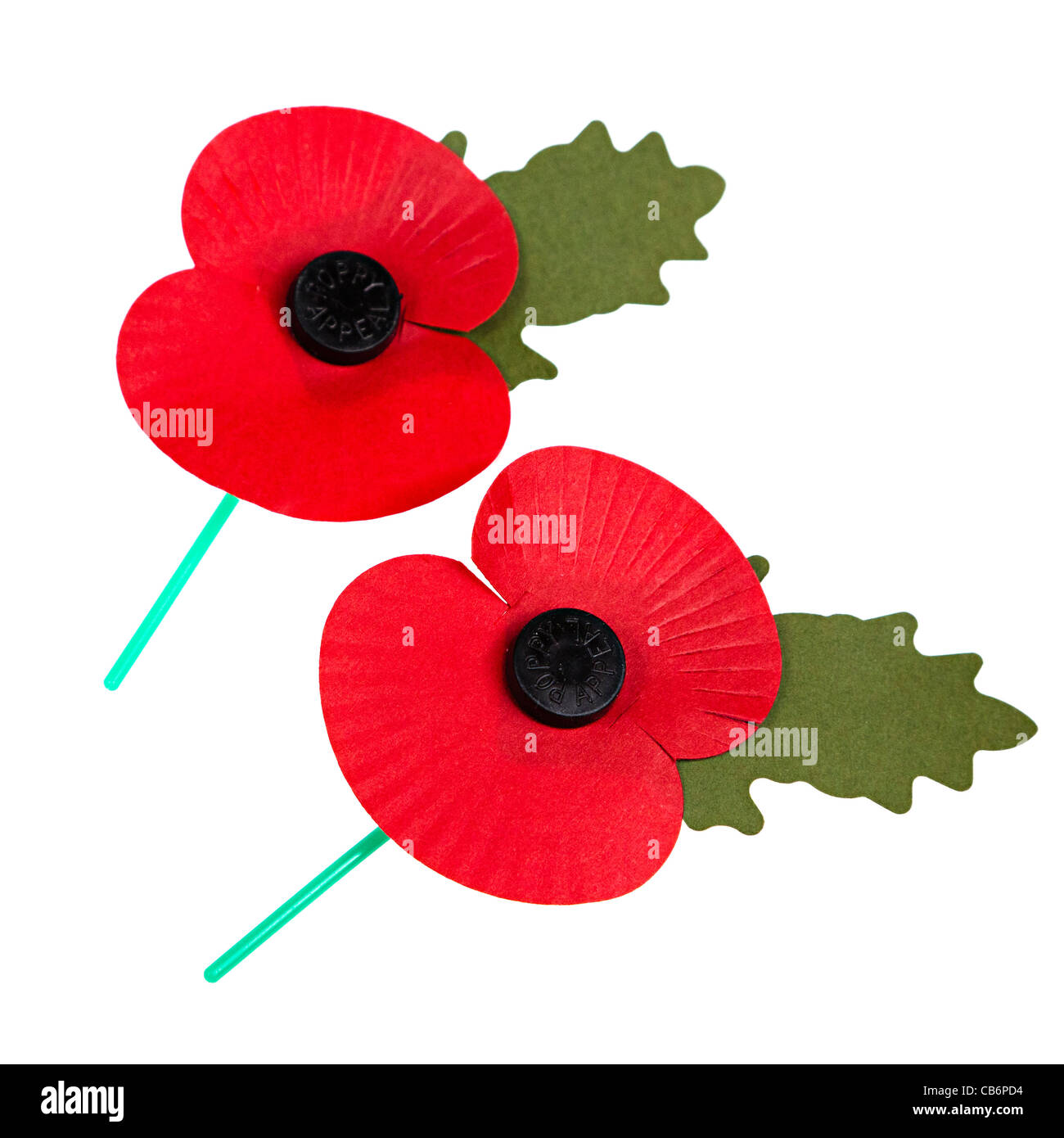 Remembrance day poppies on white cut out UK - Stock Image