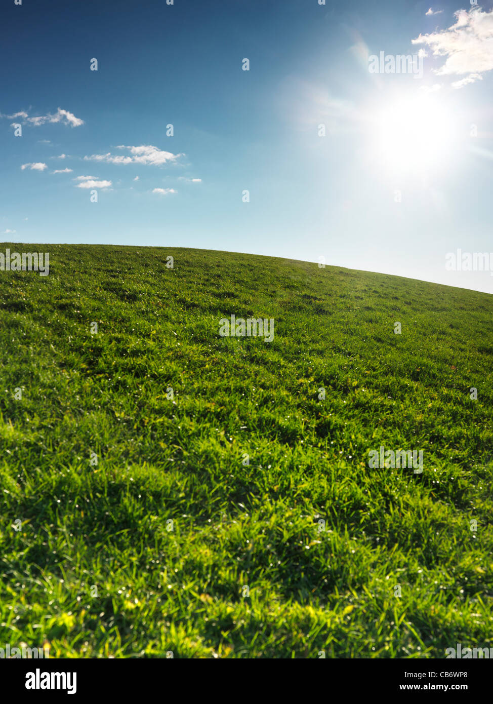 Green grassland landscape under blue clear sky lit with bright sunlight. Nature backdrop background. - Stock Image