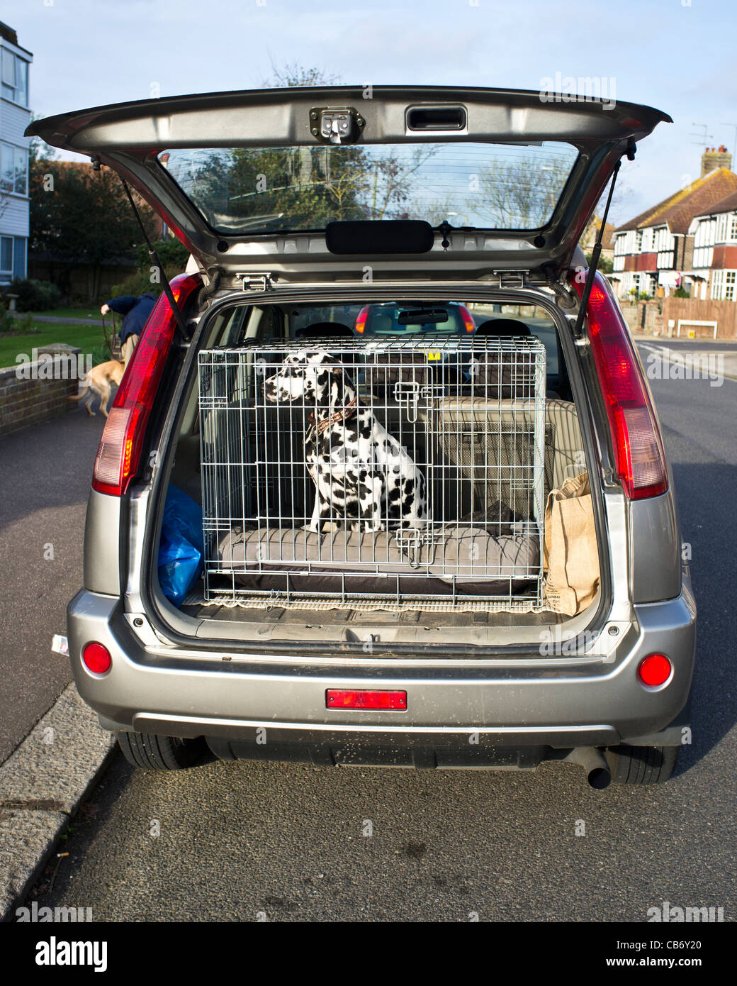 A dalmatian dog waits in a cage positioned in the back of a hatchback car. - Stock Image