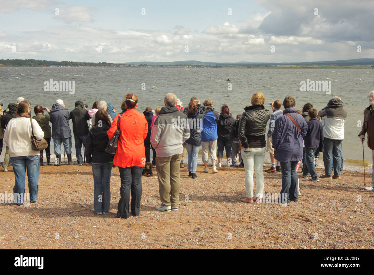 People watching bottle-nosed dolphin UK - Stock Image