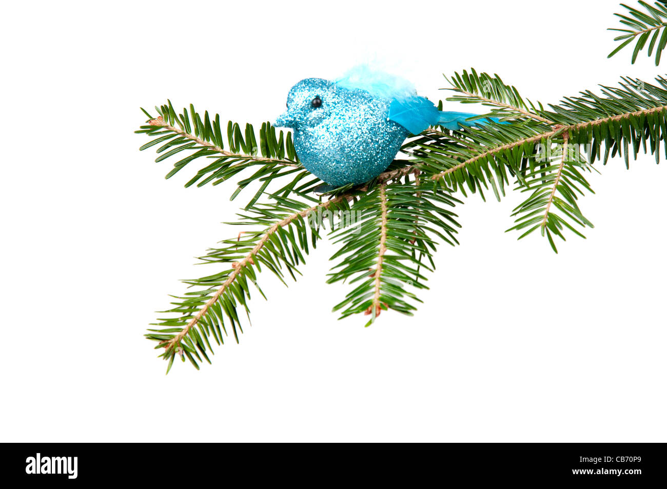 Blue bird sitting on a Christmas tree. On the white background. - Stock Image