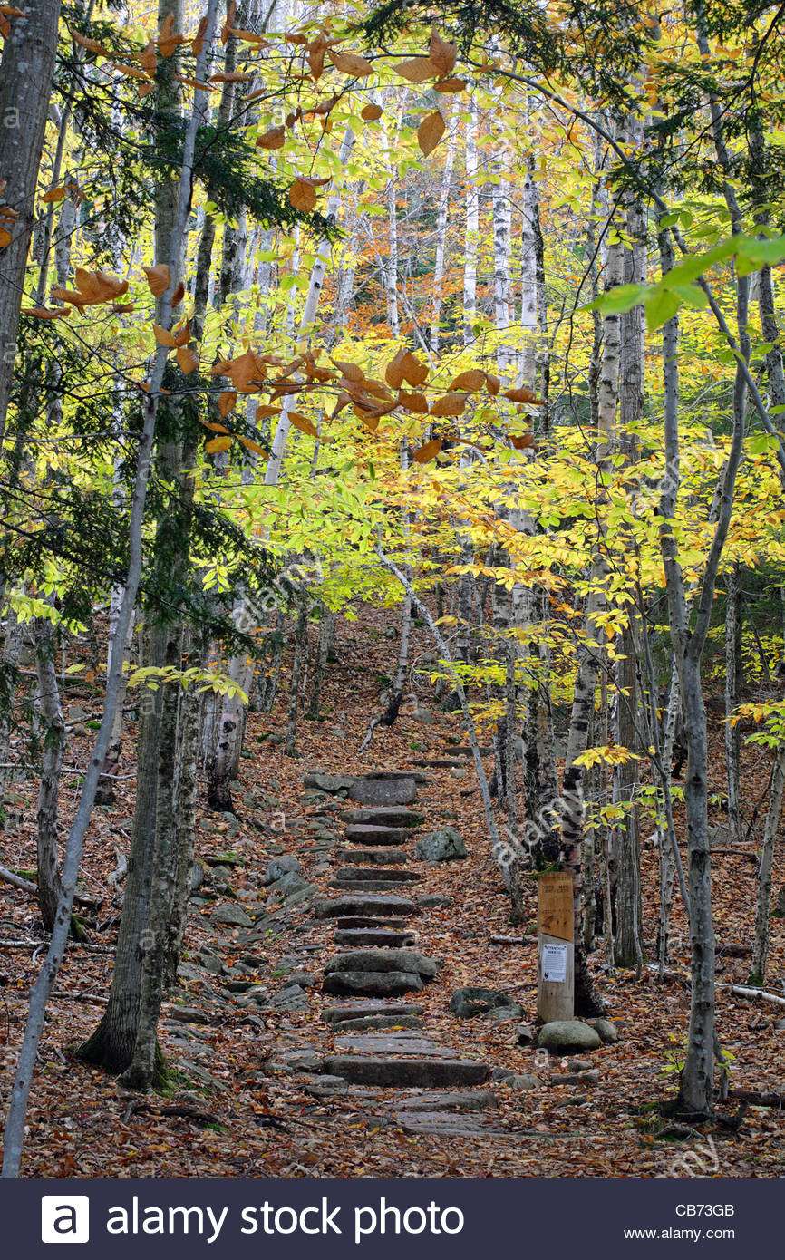 Emery Path in the Fall, Acadia National Park, Maine, USA - Stock Image