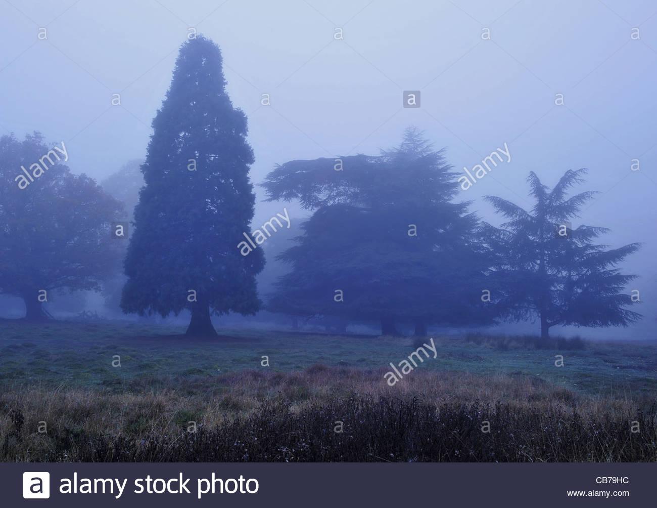 Trees in morning fog, Richmond Park London UK - Stock Image