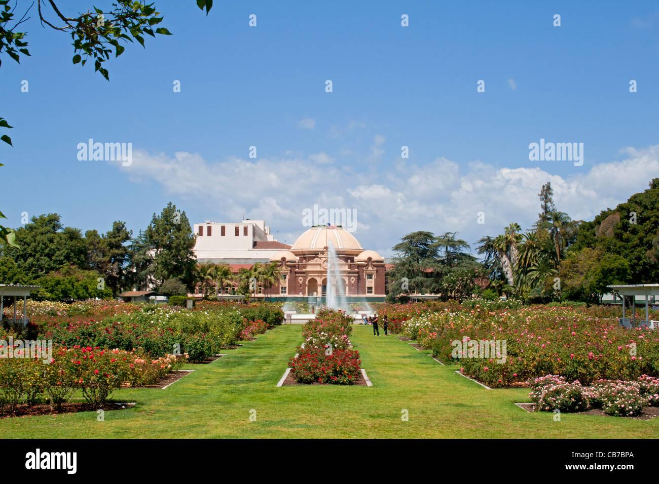 Rose Garden, Exposition Park, Los Angeles, California (LA) - Stock Image
