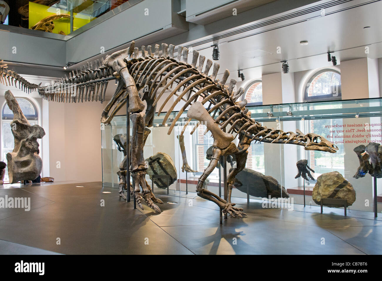Camptosaurus, Dinosaur Hall, Natural History Museum, Los Angeles, California, USA - Stock Image