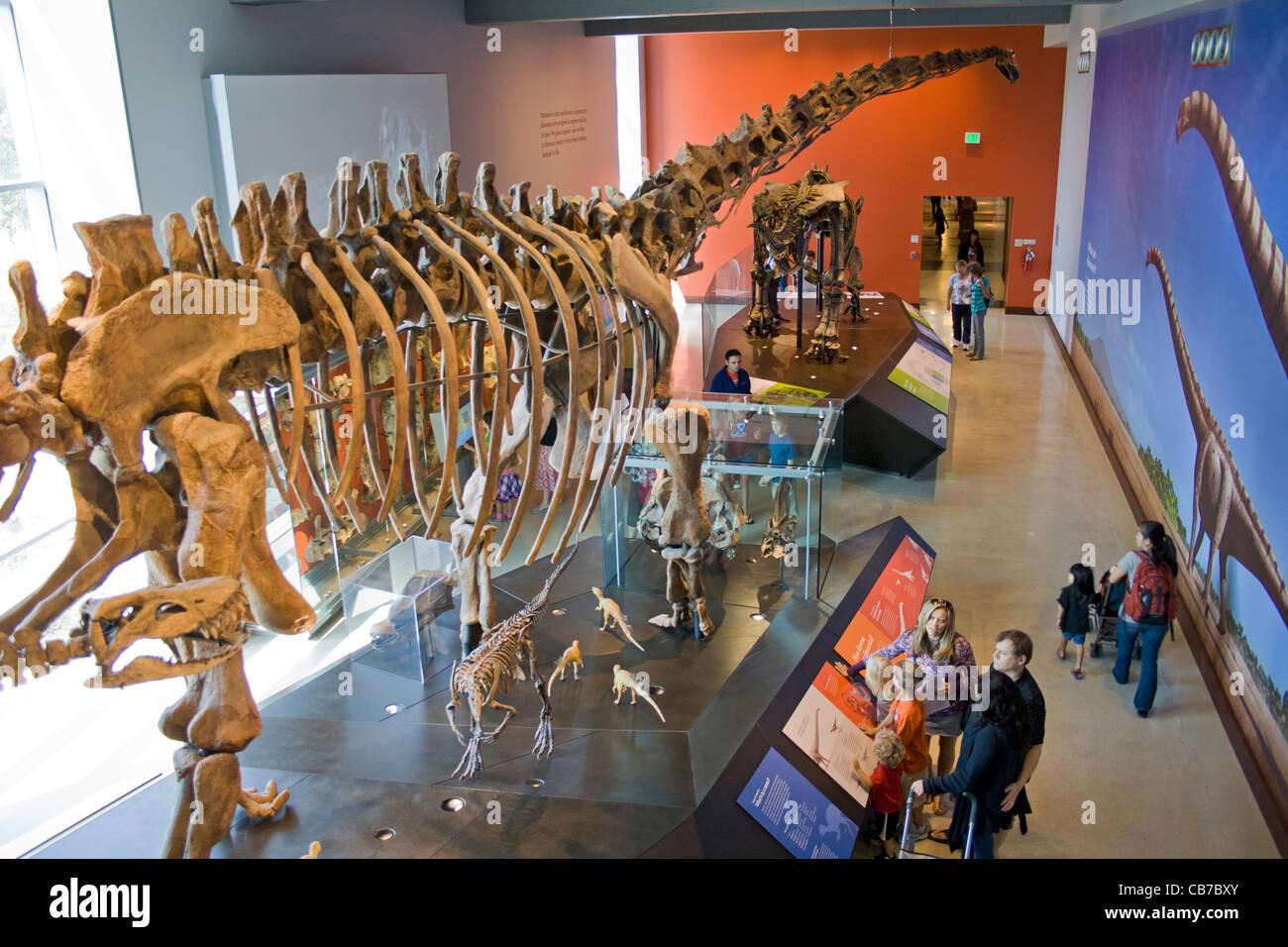 Dinosaur Hall, Natural History Museum, Los Angeles, California, USA - Stock Image