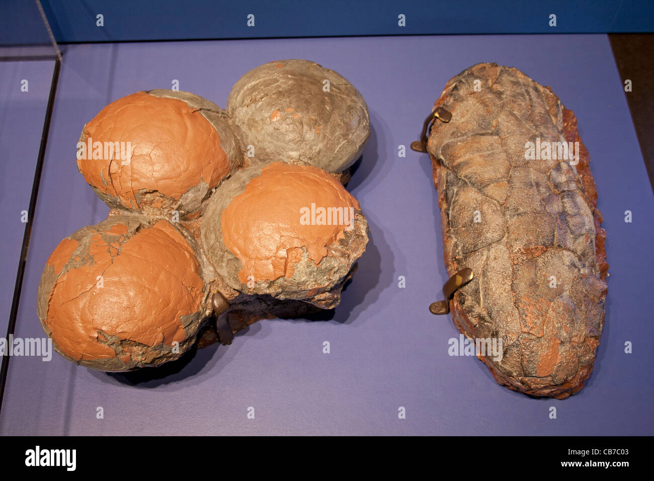 Dinosaur eggs, Dinosaur Hall, Natural History Museum, Los Angeles, California, USA - Stock Image