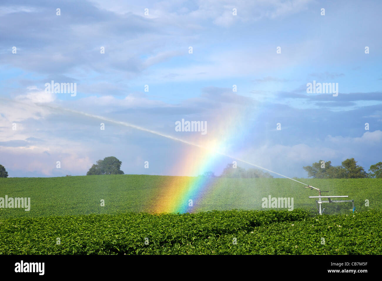 Rainbow forming in spray from water irrigation on potato crop near Oswestry in June, Shropshire, England, UK, United - Stock Image
