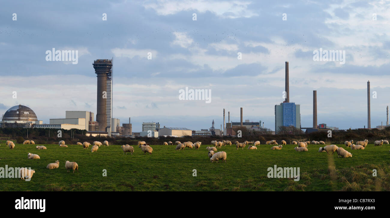 Panorama of Sellafield Skyline behind a field full of sheep. - Stock Image