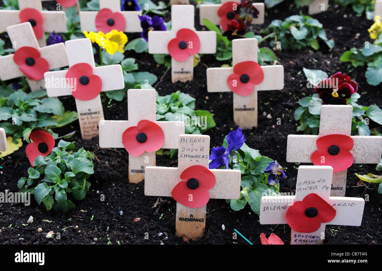 Remembrance Day Poppies uk - Stock Image