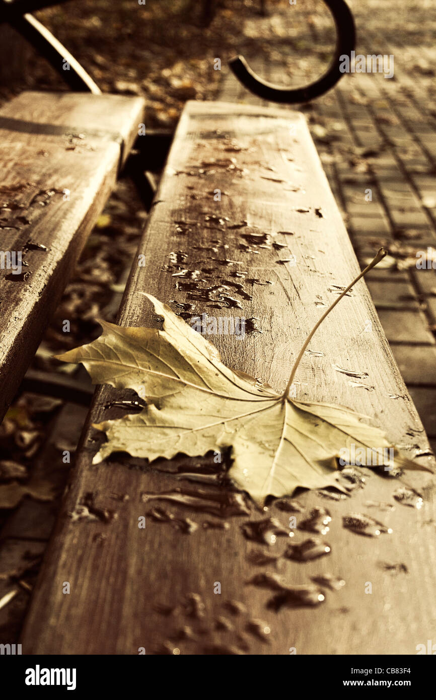 Autumn sheet on a bench - Stock Image