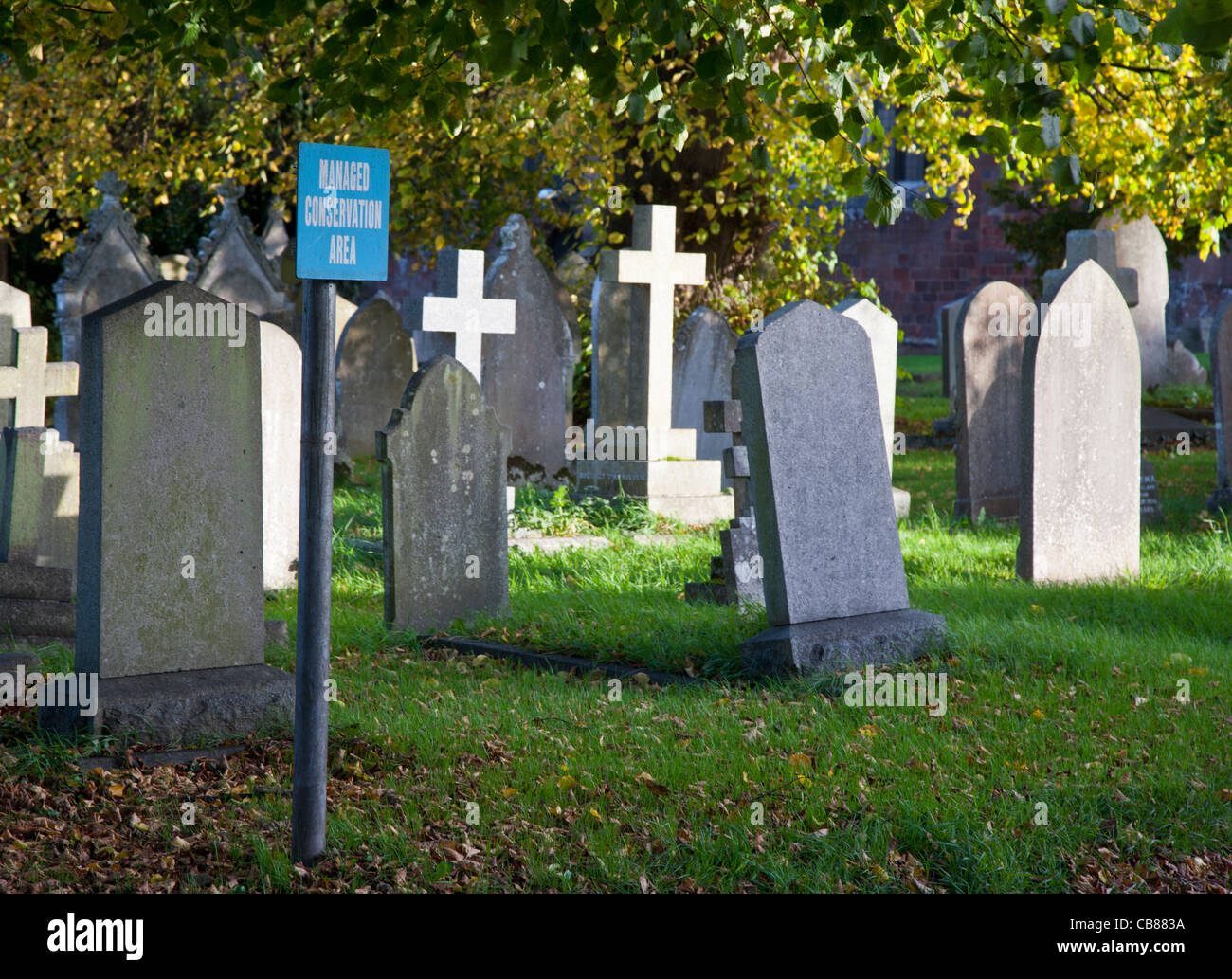 Graveyard with sign saying it is a Managed Conservation Area in Crediton, Devon, England - Stock Image