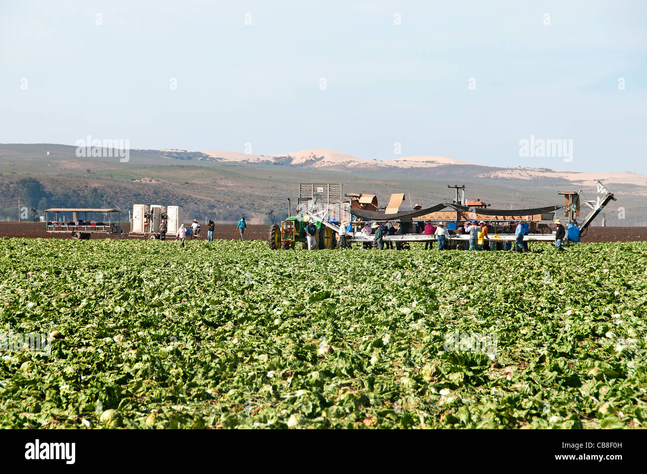 Santa Barbara County California Farm migrant work Workers Hispanic Mexican Mexico Harvest Farming - Stock Image