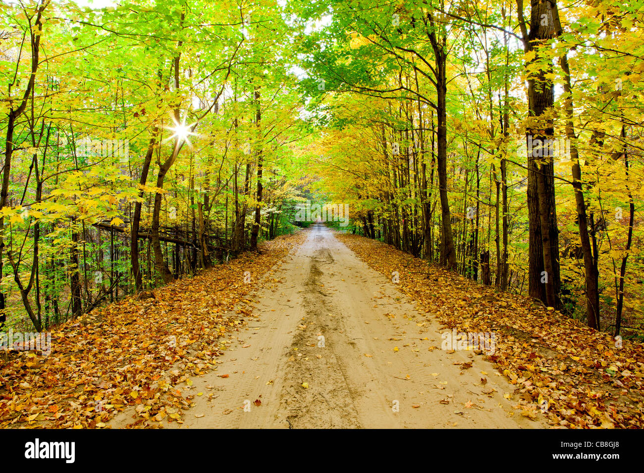 Road covered in fall leaves - Stock Image