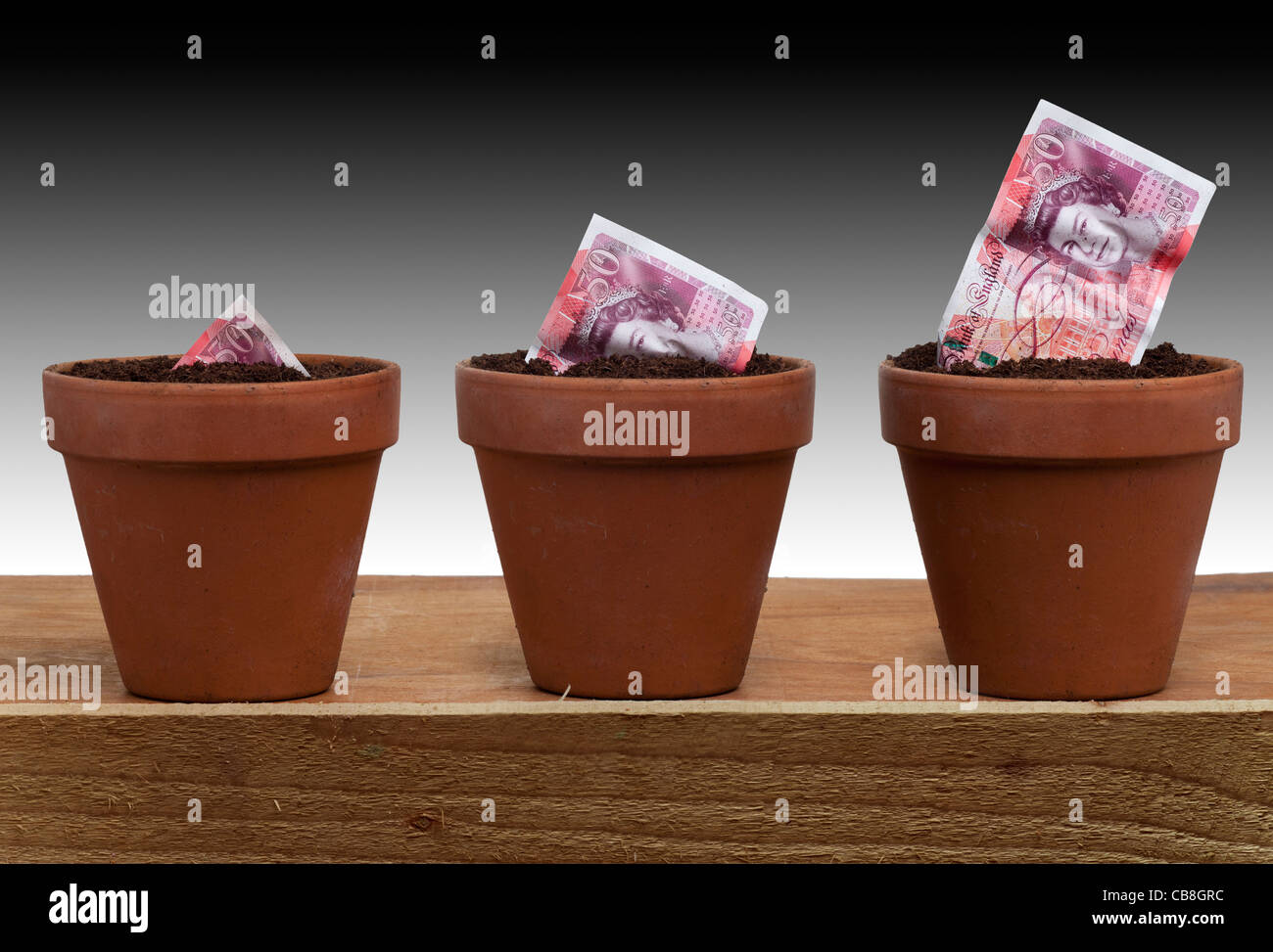 £50 50 pound note seedling growing into UK Bank of England new currency in an earthenware terracotta flower - Stock Image
