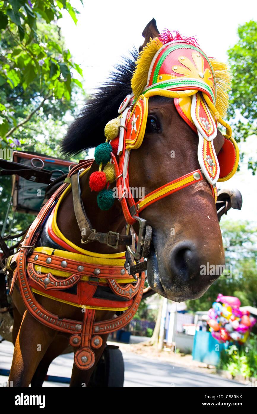 a  bay horse - Stock Image