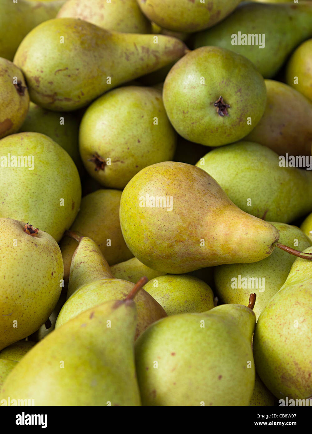 Concorde pears - Stock Image