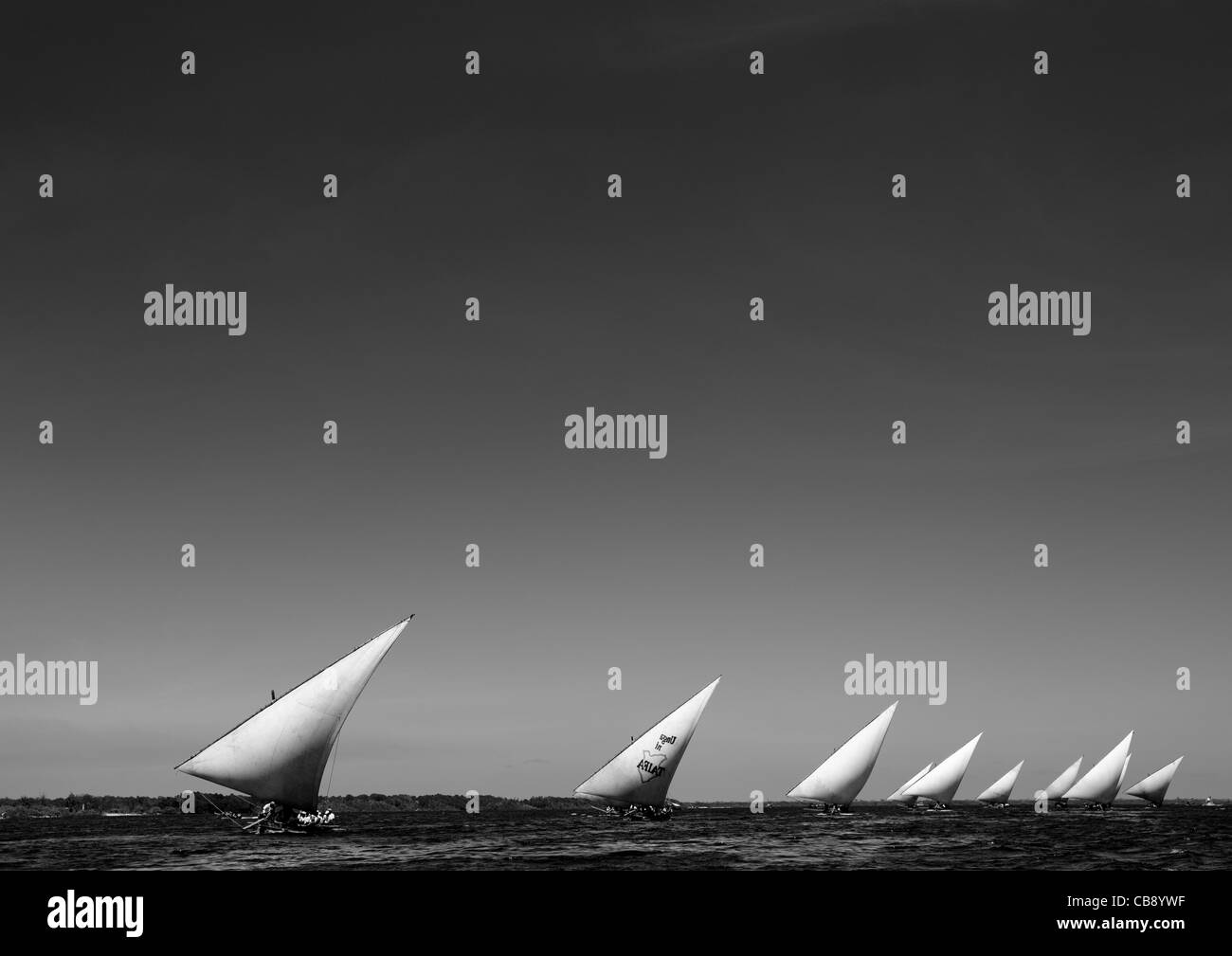 Dhows Sailing In A Row, Dhow Race During Maulidi Festival, Lamu, Kenya - Stock Image